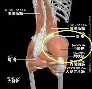 腰回りの筋肉